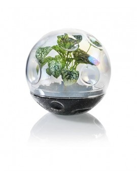 Maan terrarium - Bitten Design