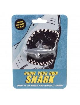 Laat je eigen haai groeien - Rex London