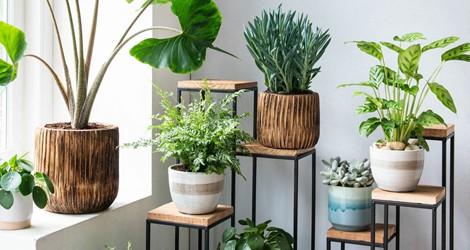 Deze 10 kamerplanten zijn super gemakkelijk in onderhoud